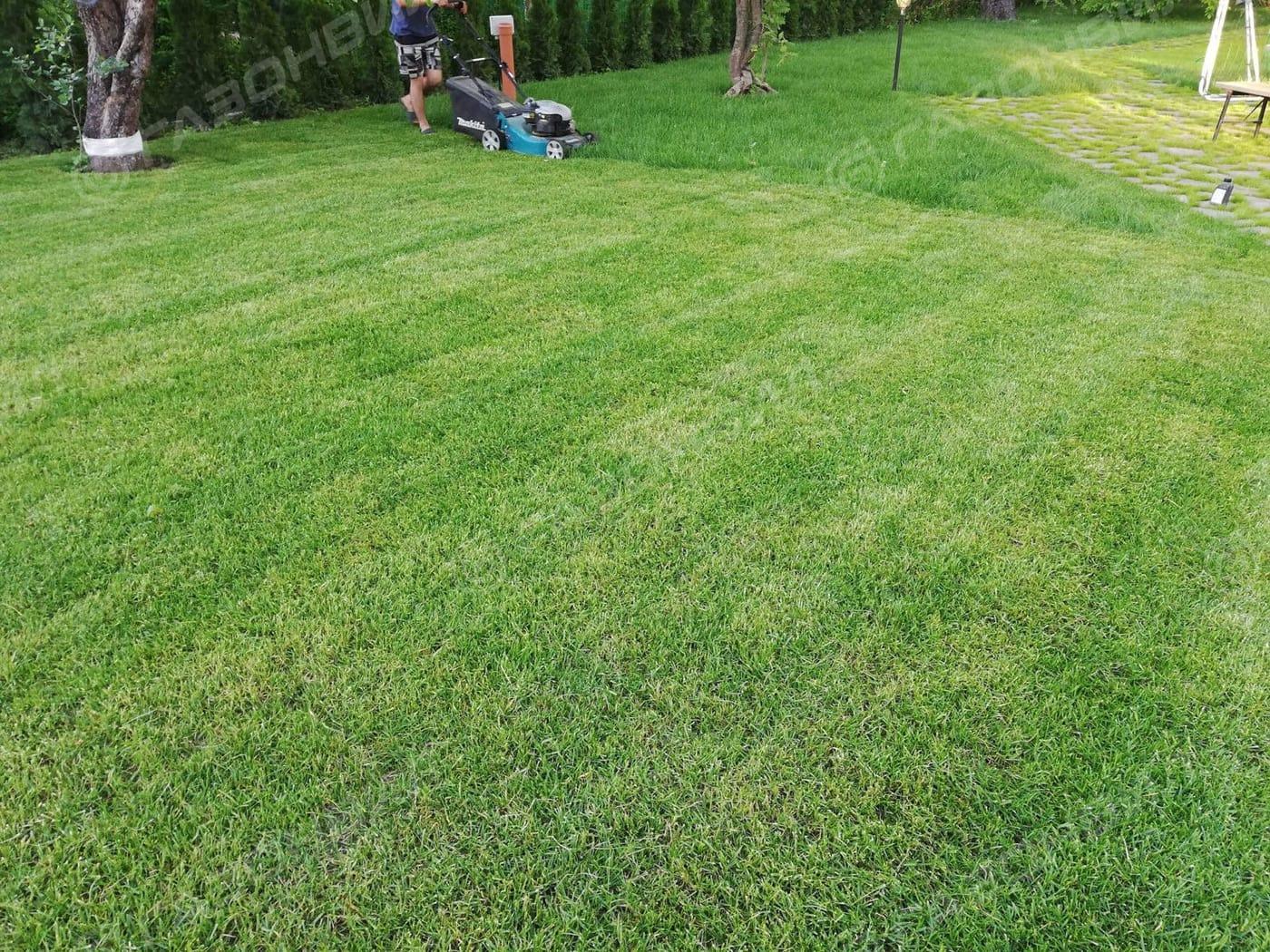 Партерный рулонный газон слайдер 4