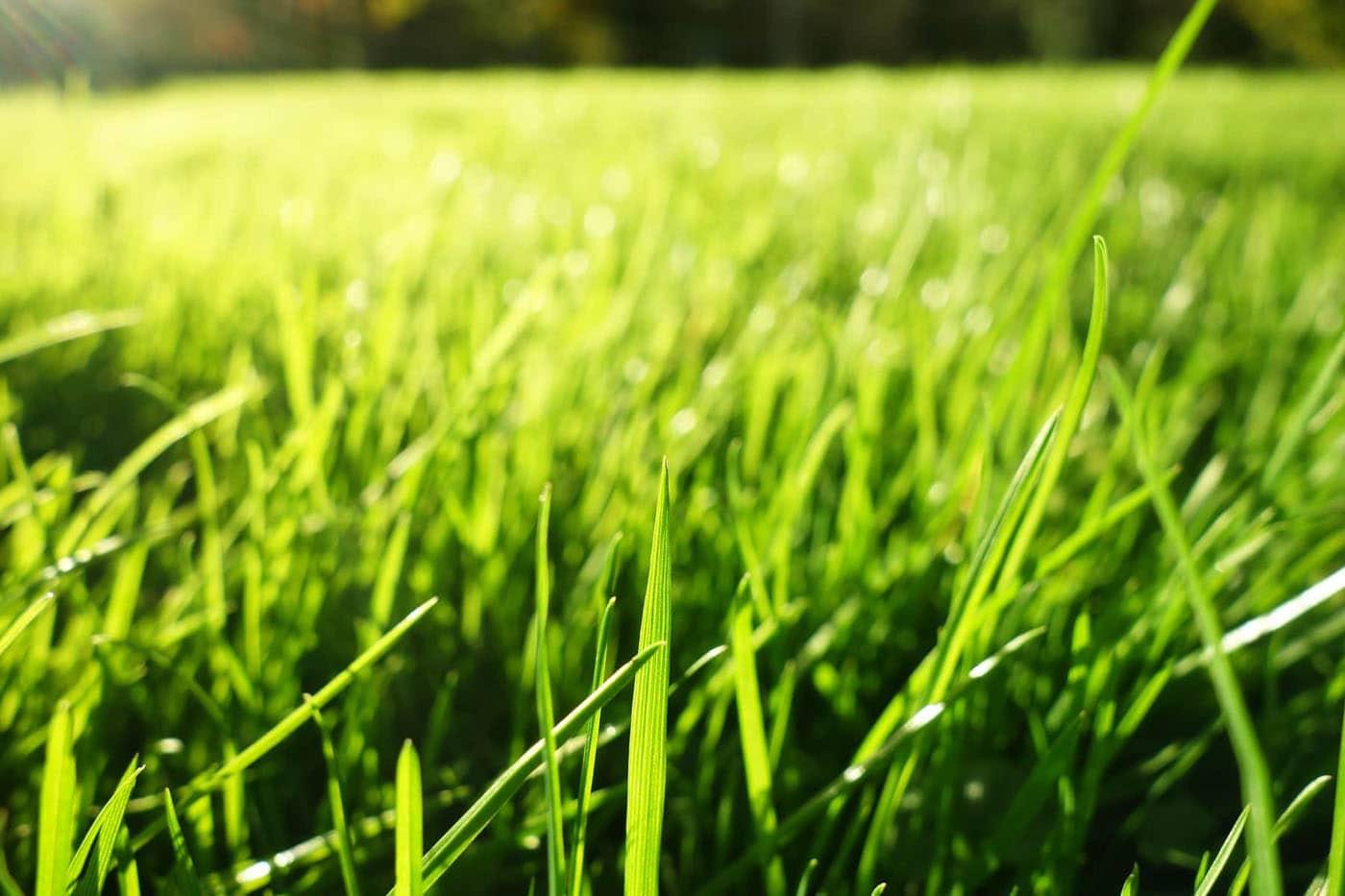 Городской рулонный газон слайдер 2