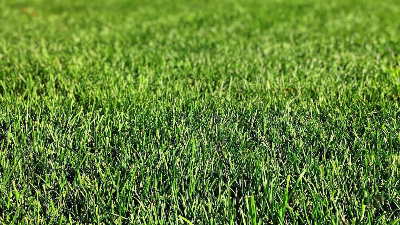 Универсальный рулонный газон слайдер 1