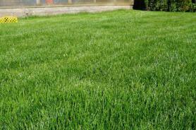Партерный рулонный газон слайдер 1