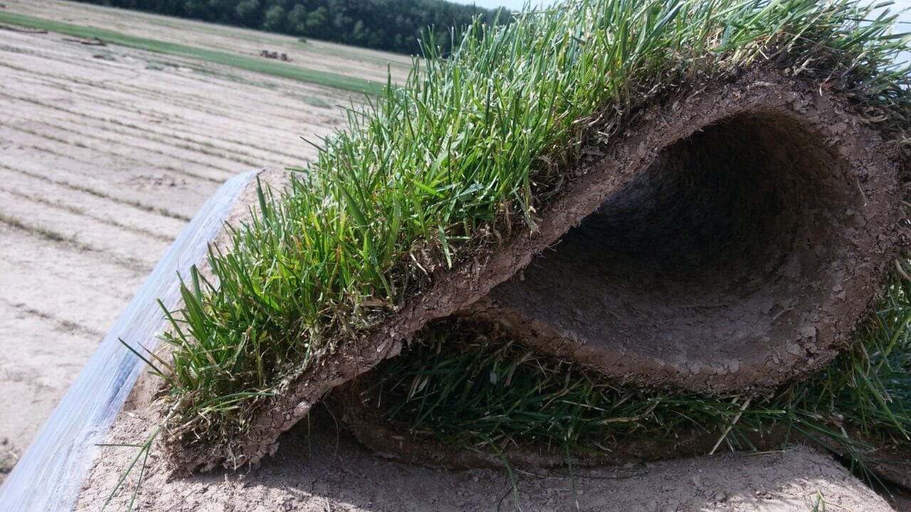 Рулонный газон премиум слайдер 2
