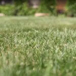 Партерный рулонный газон