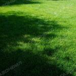 Рулонный газон премиум навигация слайдера 1