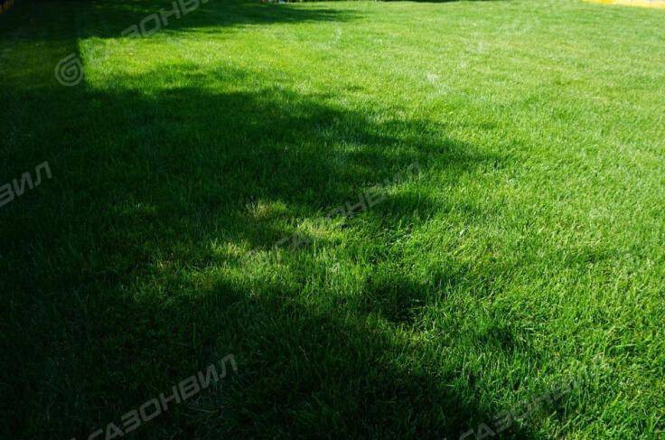 Рулонный газон премиум слайдер 1