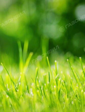 Купить газоны оптом от производителя
