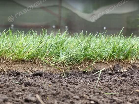 Универсальный рулонный газон