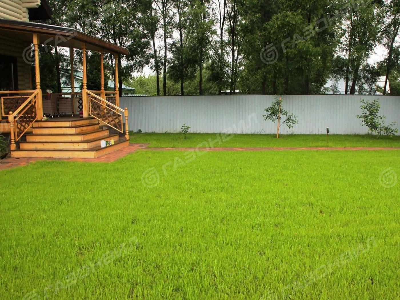 Засухоустойчивый газон слайдер 3
