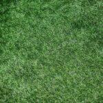 Низкорослый (карликовый) газон навигация слайдера 2