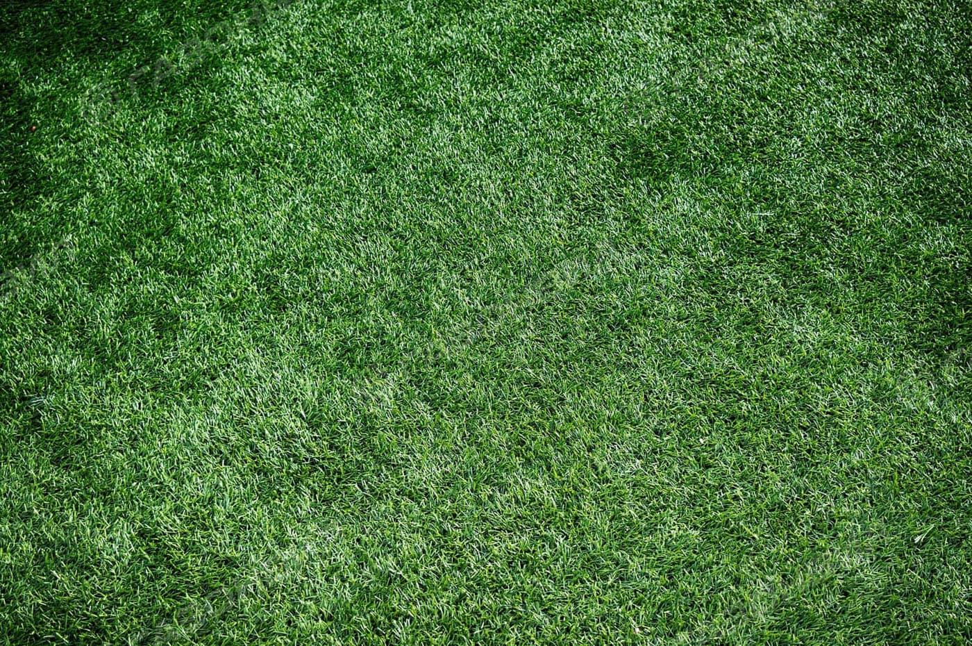 Низкорослый (карликовый) газон слайдер 2
