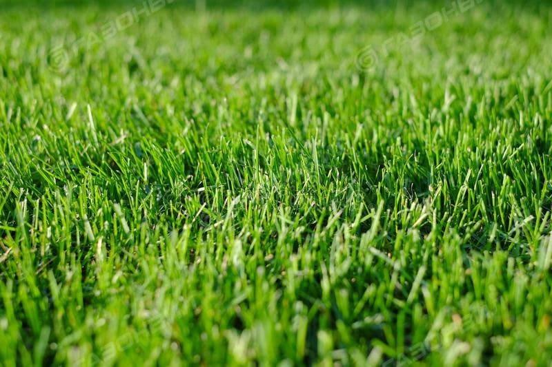 Засухоустойчивый газон слайдер 1