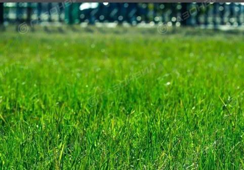 Придорожный газон