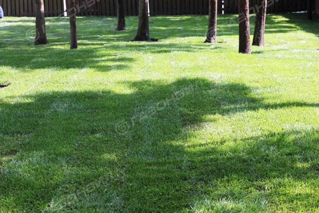 Восстановление газона на даче