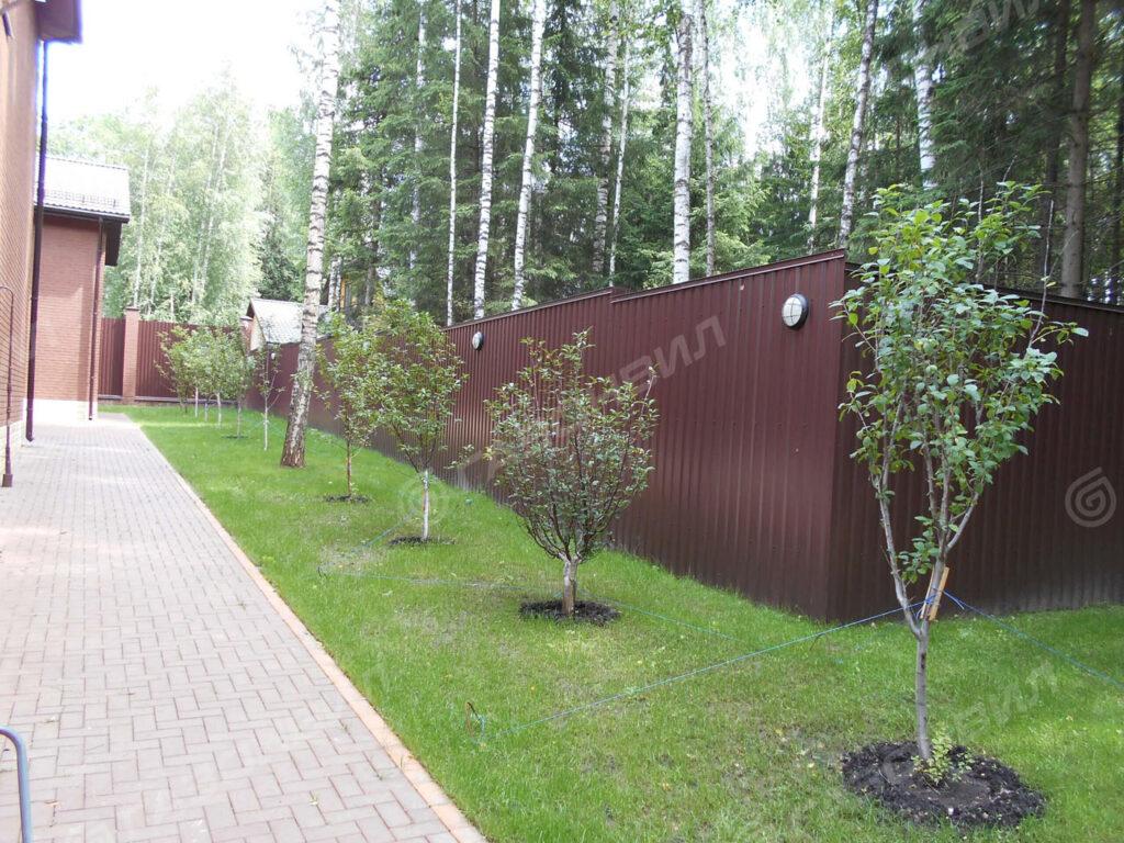 Посадка деревьев на участке