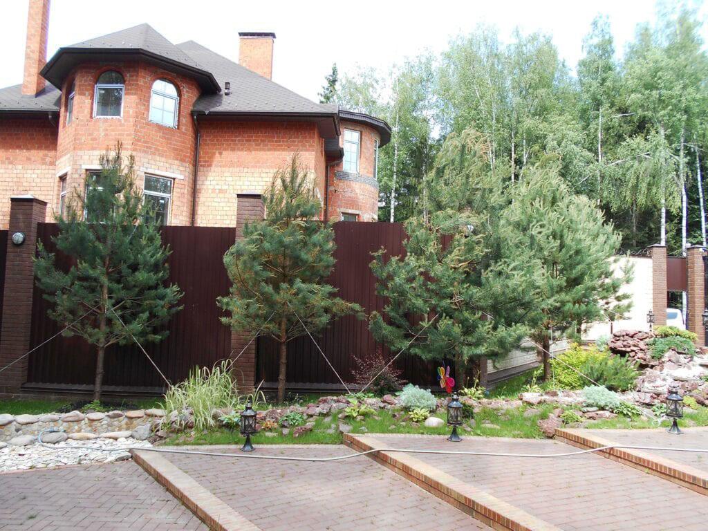 Посадка деревьев на даче