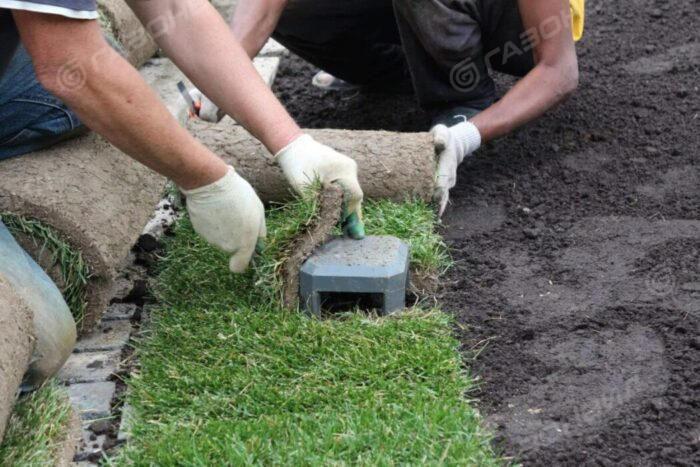 Как уложить газон