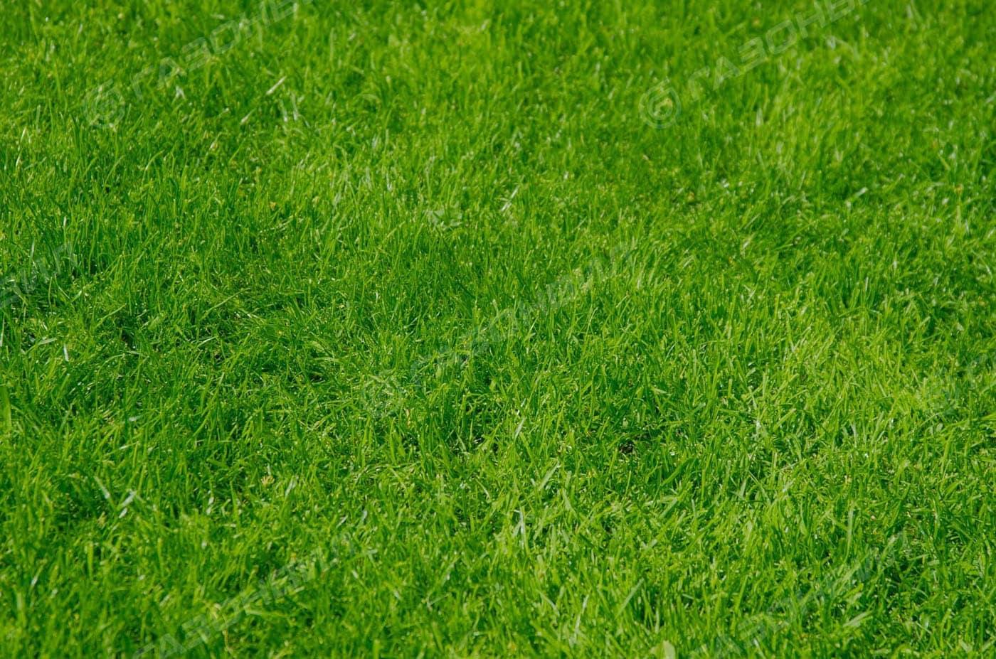 Теневой газон слайдер 1