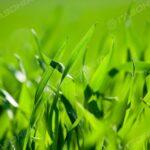 Трава для газона на склоне навигация слайдера 2