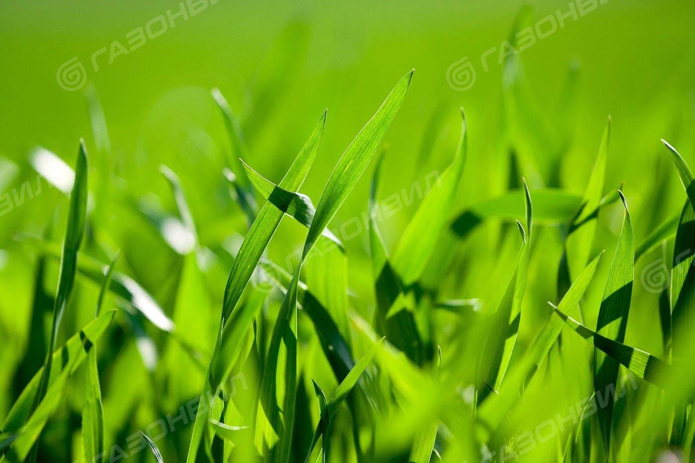 Трава для газона на склоне слайдер 2