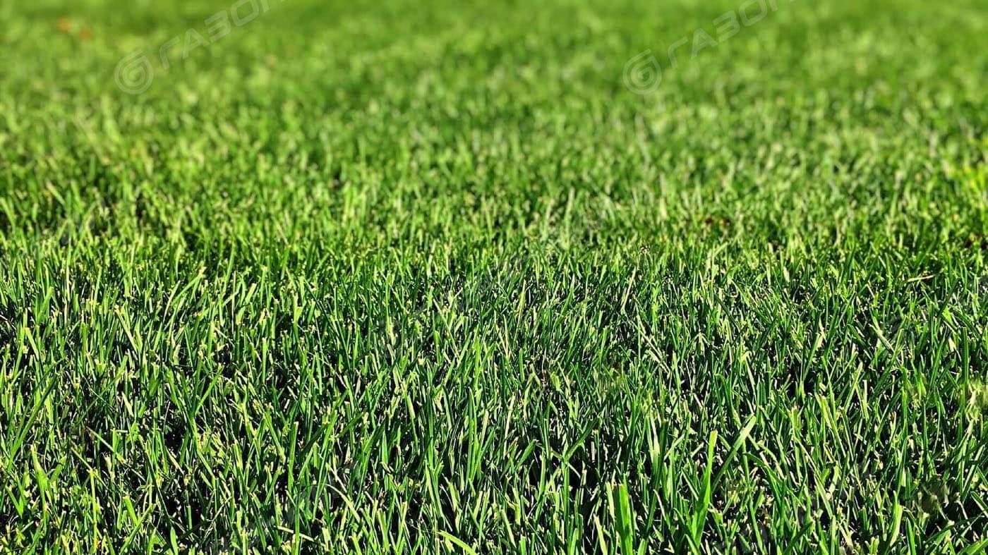 Английский газон слайдер 1
