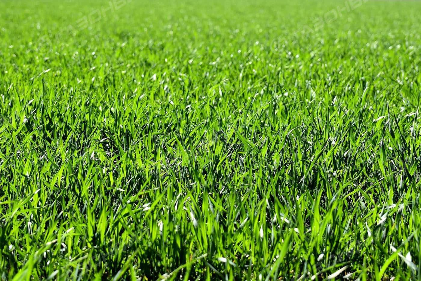 Английский газон слайдер 2