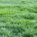 Английский газон