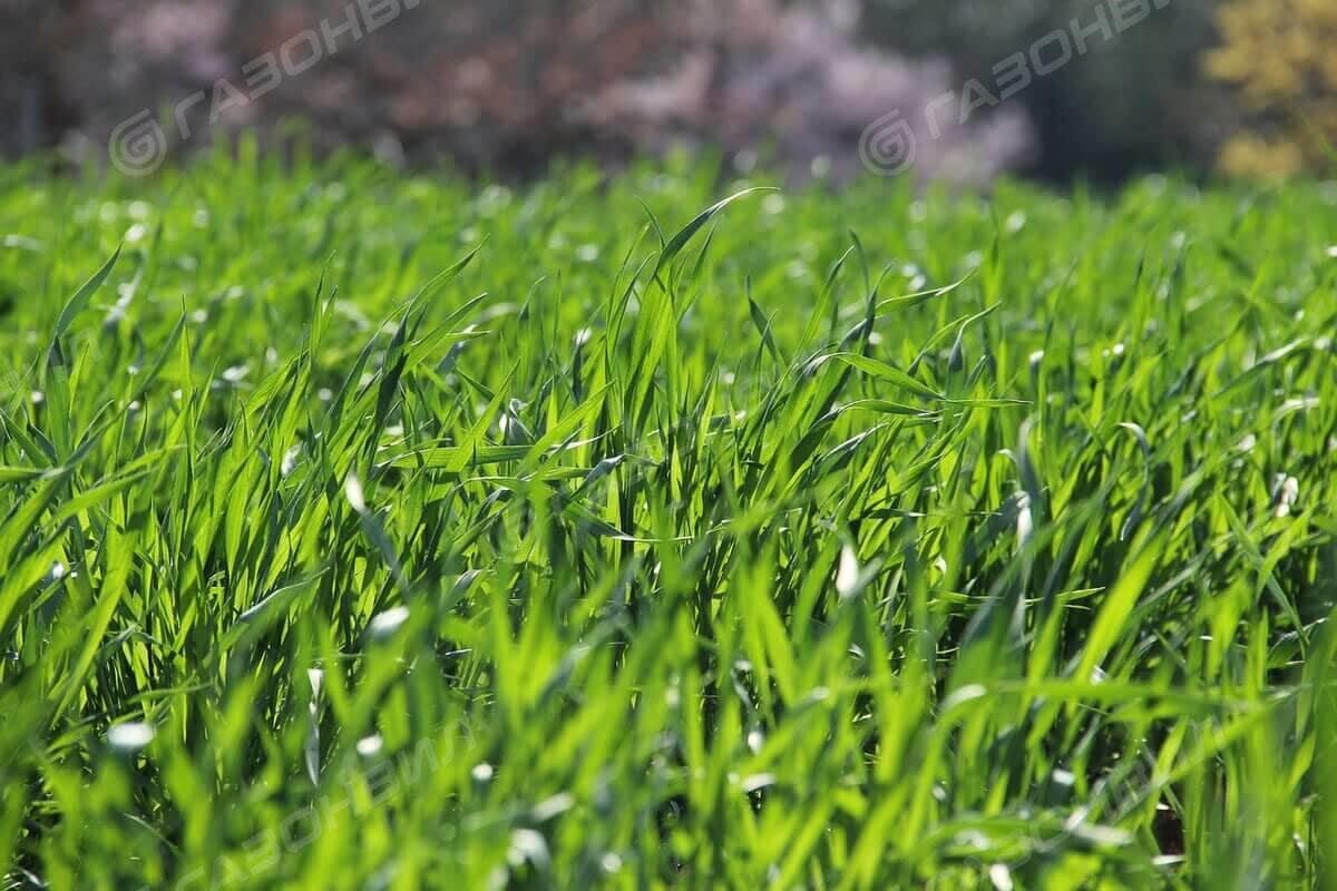 Быстрый газон слайдер 1