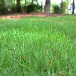 Трава для газона на склоне навигация слайдера 1