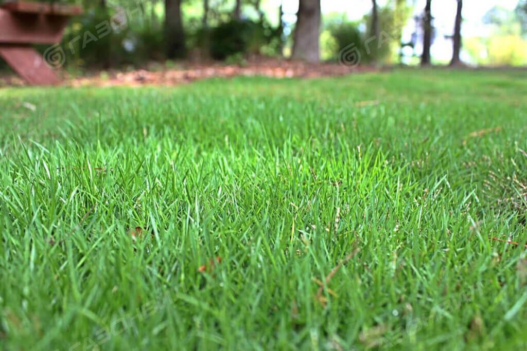 Трава для газона на склоне слайдер 1
