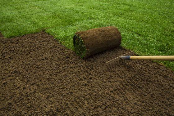 Теневыносливый рулонный газон слайдер 2
